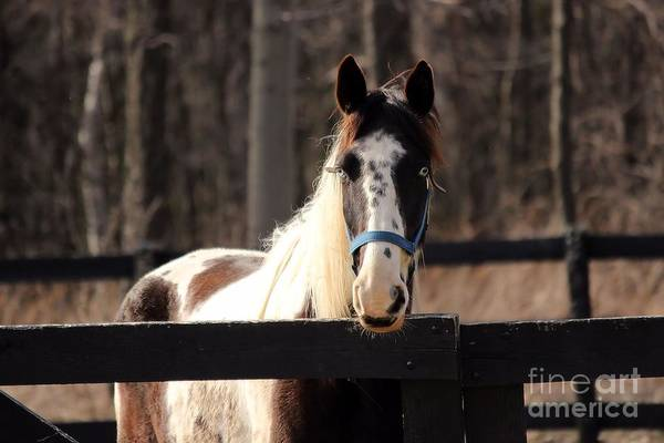 Photograph - Horse At The Gate by Janice Byer
