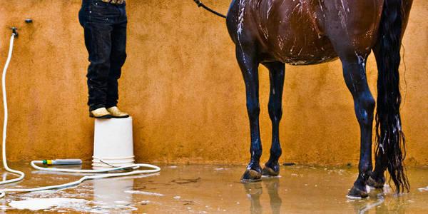 Photograph - Horse Bath by Robert FERD Frank