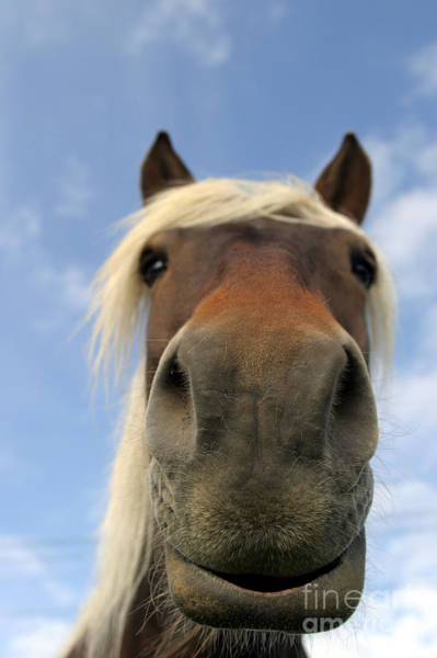 Photograph - Horse Close-up by M Watson