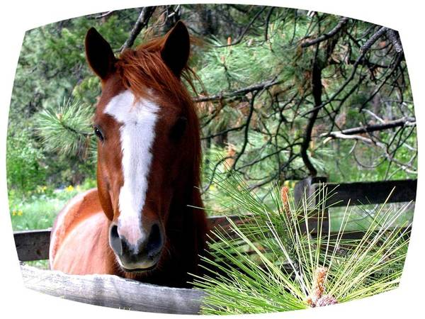 Steed Photograph - Horse Country by Will Borden