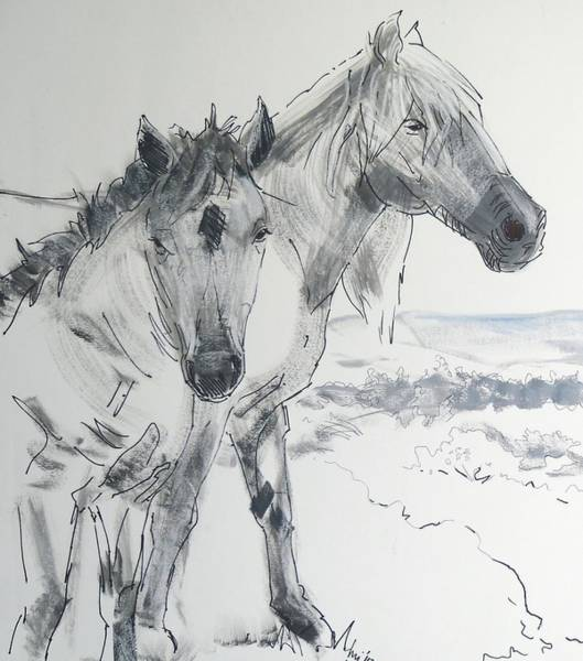 Painting - Horse Drawing by Mike Jory