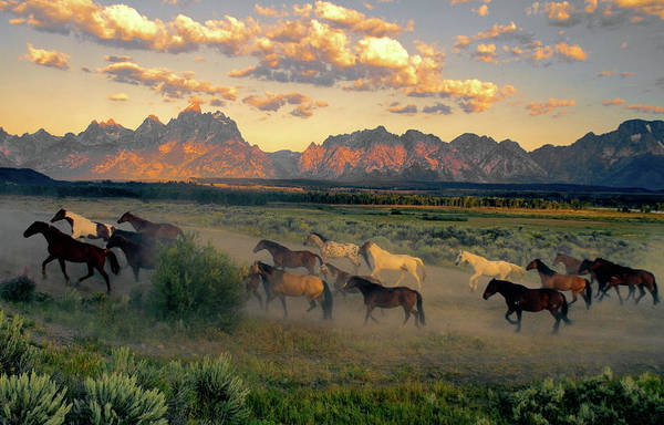Horse Photograph - Horse Drive At Teton Sunrise by Patricia Bauchman Photography