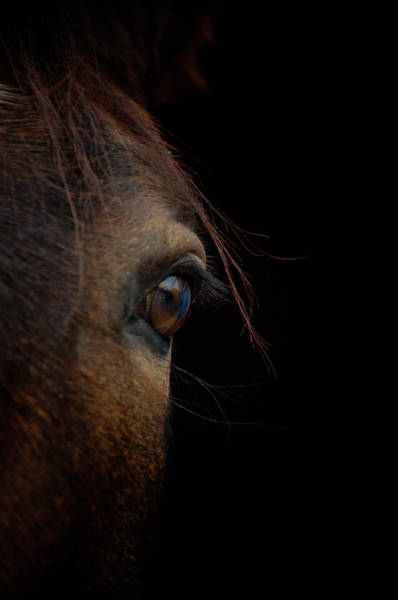 Domestic Animals Photograph - Horse Eye by By Ana Gassent