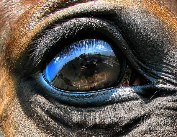 Photograph - Horse Eye by Daliana Pacuraru