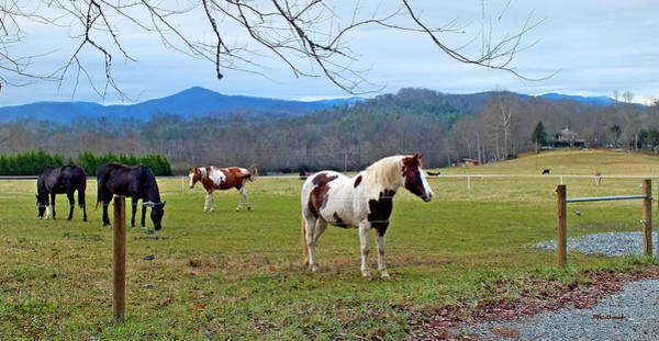 Photograph - Horse Farm In Eastern Transylvania County by Duane McCullough