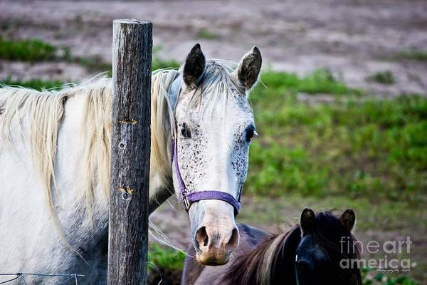 Photograph - Horse Freckles by Ms Judi