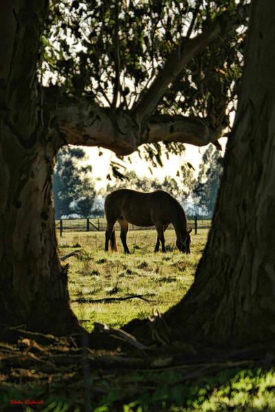 Photograph - Horse Grazing by Blake Richards
