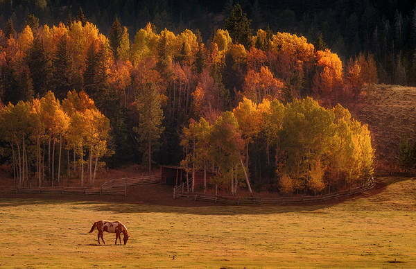 Grazing Photograph - Horse Grazing During Sunset by Matt Anderson Photography