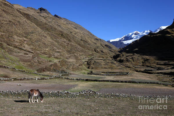 Photograph - Horse Grazing In The Cordillera Apolobamba Foothills by James Brunker