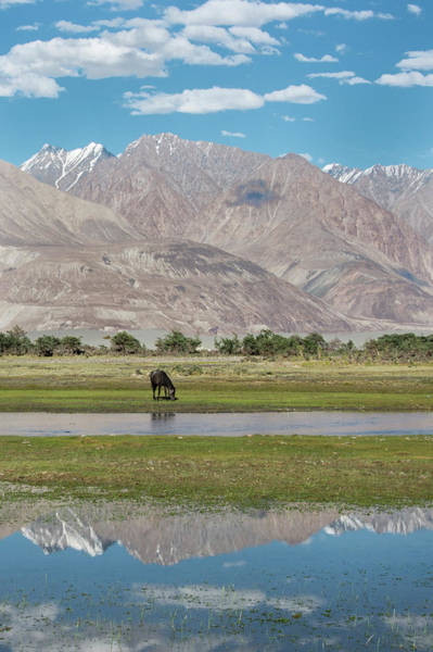 Grazing Photograph - Horse Grazing In Nubra Valley by Diana Mayfield