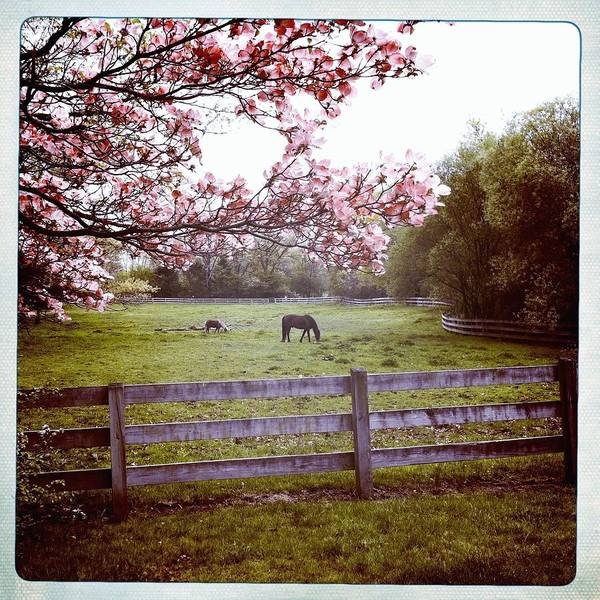 Grazing Photograph - Horse Grazing In Pasture by Monica Fecke