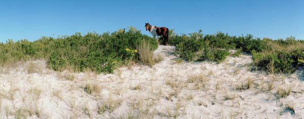 Assateague Island Photograph - Horse Grazing On Beach, Assateague by Animal Images