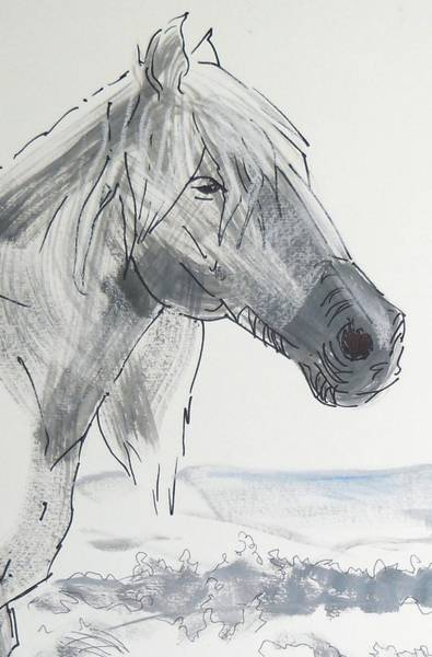 Painting - Horse Head Drawing by Mike Jory