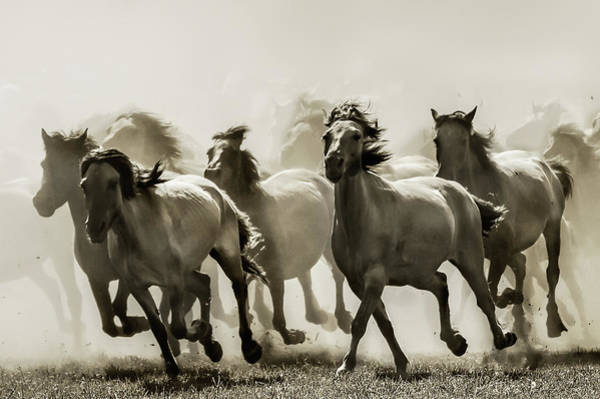 Run Wall Art - Photograph - Horse by Heidi Bartsch