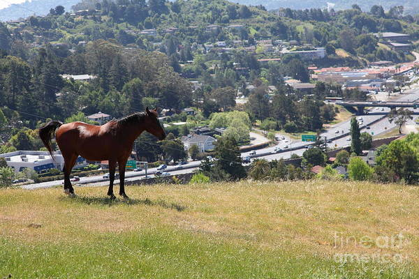 Photograph - Horse Hill Mill Valley California 5d22663 by Wingsdomain Art and Photography