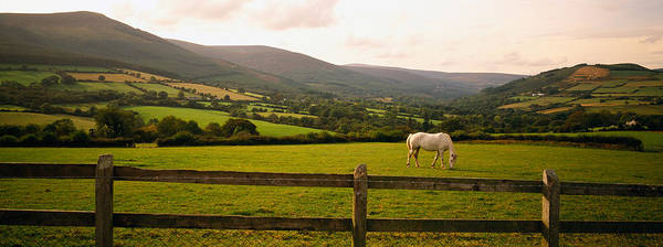 Boundary County Photograph - Horse In A Field, Enniskerry, County by Panoramic Images