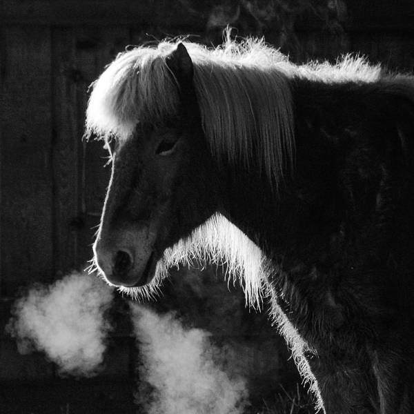 Black And White Photograph - Horse In Black And White Square Format by Matthias Hauser