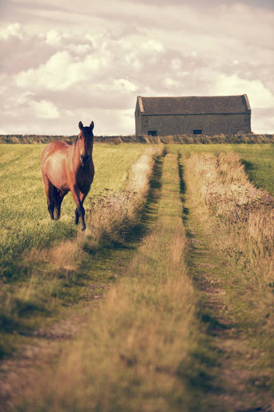 Moorland Photograph - Horse In Field by Amanda Elwell