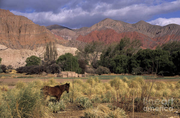 Photograph - Horse In Quebrada De Humahuaca by James Brunker
