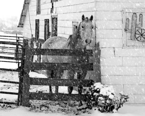 Cass Wall Art - Photograph - Horse In Snow by Nikolyn McDonald