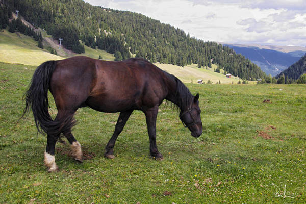 Photograph - Horse In The Alps by Raffaella Lunelli