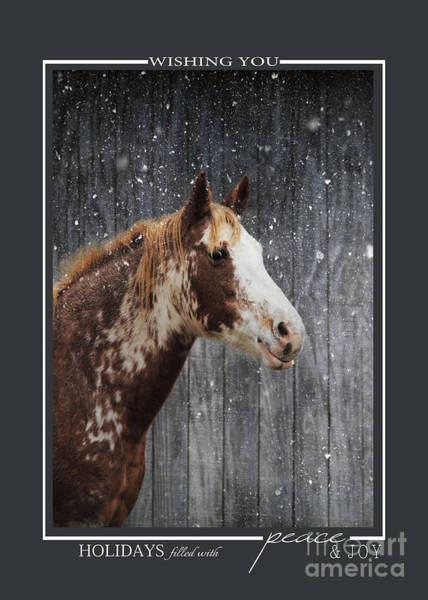 Photograph - Horse In The Snow Christmas Cards by Jai Johnson