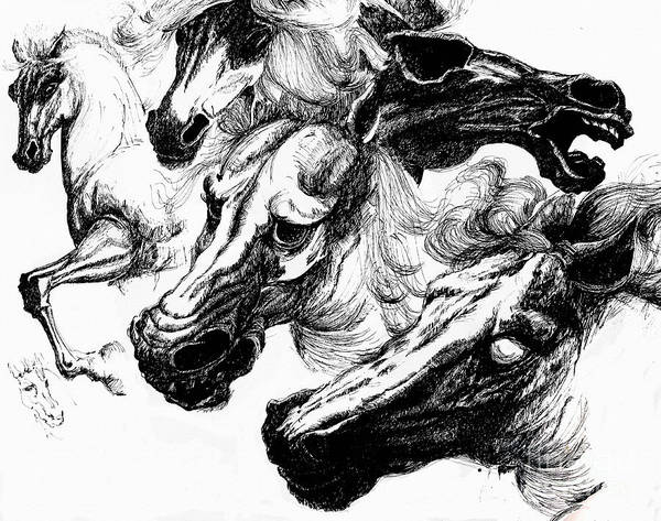 Horse Ink Drawing  Art Print