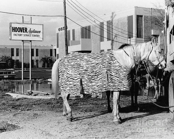 Photograph - Horse Of A Different Color by Susan Schroeder