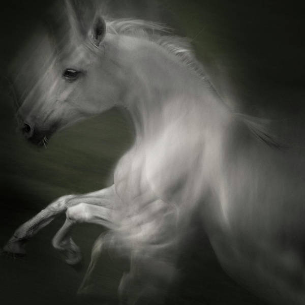 Blur Wall Art - Photograph - Horse Of Power by Milan Malovrh