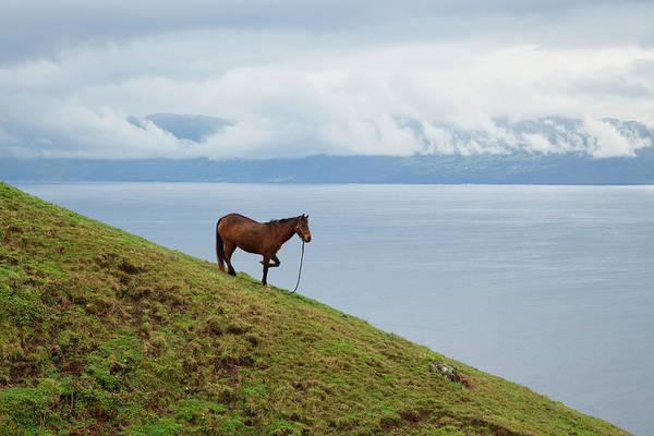 Wall Art - Photograph - Horse On A Hillside Overlooking by Carl Bruemmer