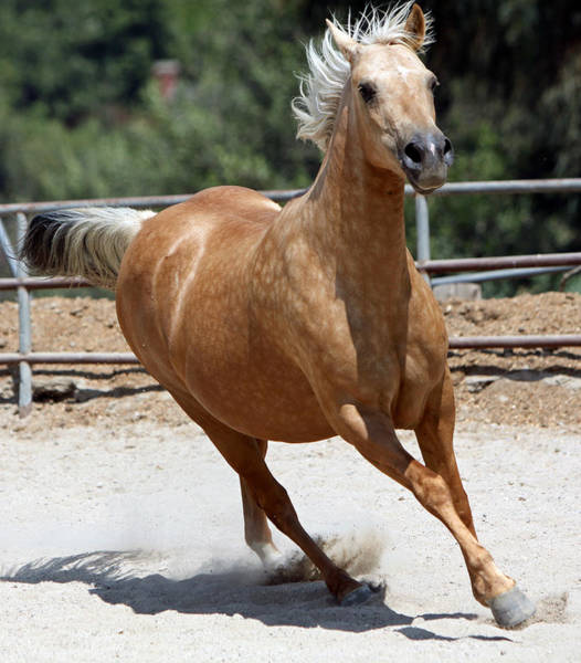 Wall Art - Photograph - Horse On The Run by Shoal Hollingsworth