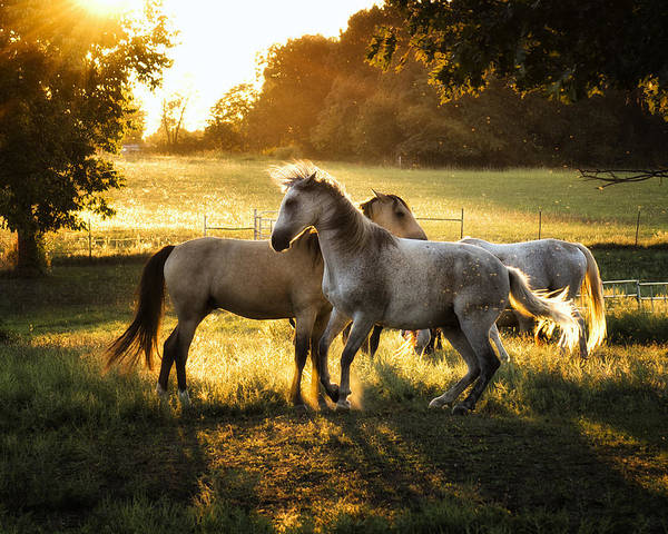 Wall Art - Photograph - Horse Play by Ron  McGinnis