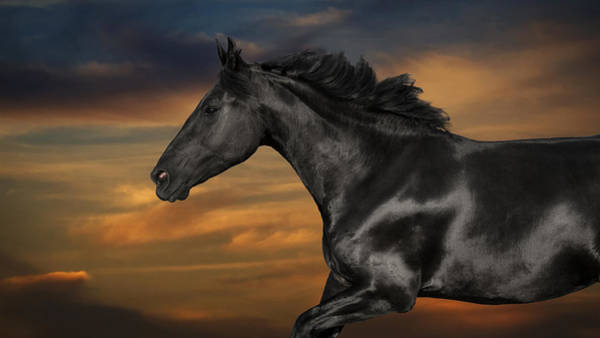 Friesian Horse Photograph - Horse Portrait At Sunset by Wolf Shadow Photography