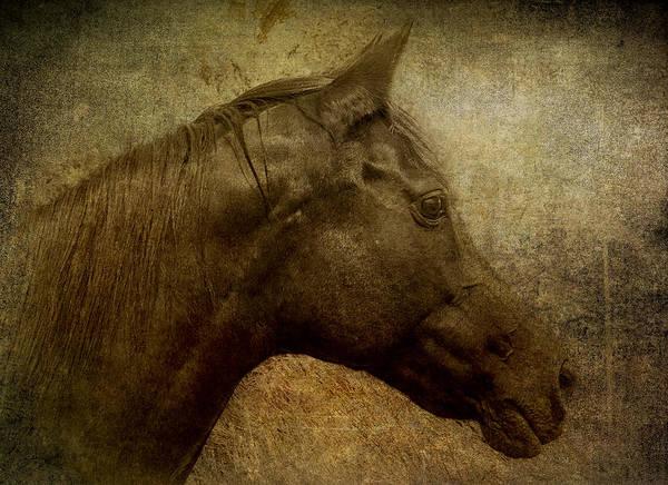 Digital Art - Horse Portriat by Lou  Novick