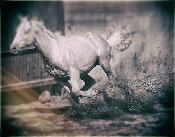 Photograph - Horse Power by Barry Weiss