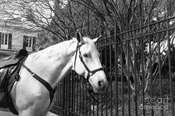 Photograph - Horse Profile Mono by John Rizzuto