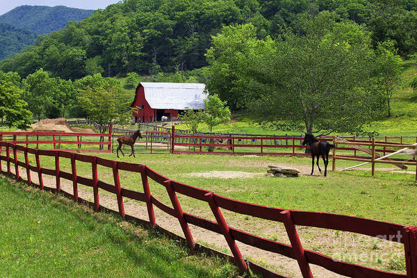 Photograph - Horse Ranch With Colts by Jill Lang