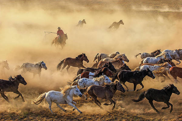 Cowboy Photograph - Horse Run by Adam Wong