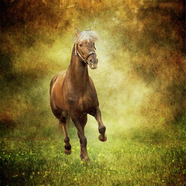 Andalusian Wall Art - Photograph - Horse Running Free In Meadow by Christiana Stawski