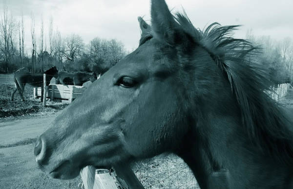 Horse Sense Art Print