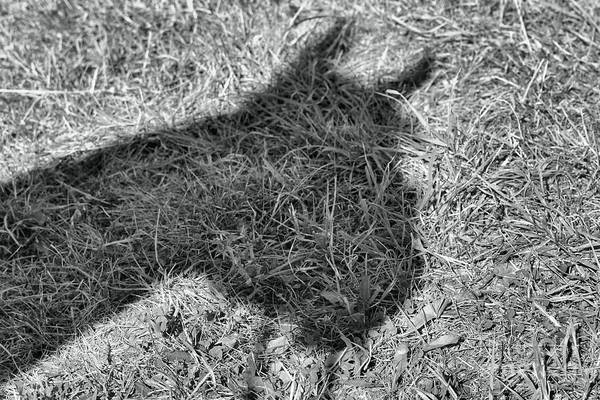 Photograph - Horse Shadow by Janice Byer