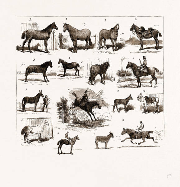 Manchester Drawing - Horse Show At Manchester, Uk by Litz Collection