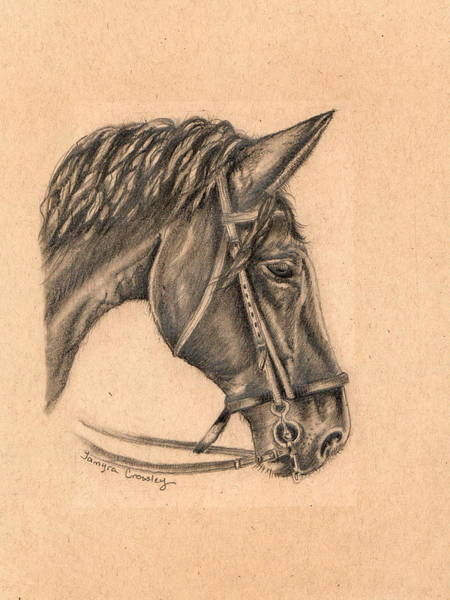 Drawing - Horse Sketch by Tamyra Crossley