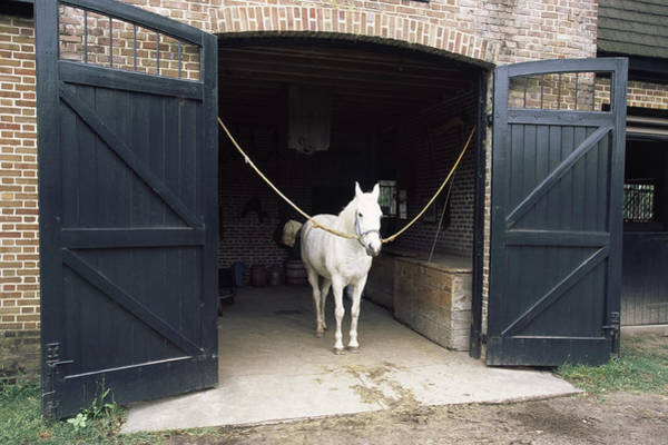 Animal Place Photograph - Horse Standing In A Stable, Middleton by Animal Images