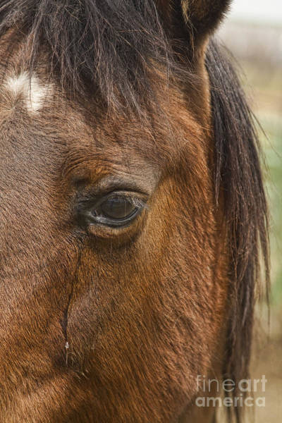 Photograph - Horse Tear by James BO Insogna
