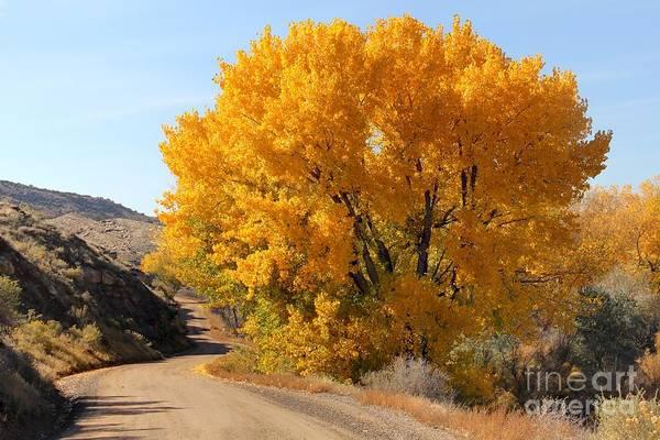 Fruita Photograph - Horse Thief Canyon Gold by Bob Hislop