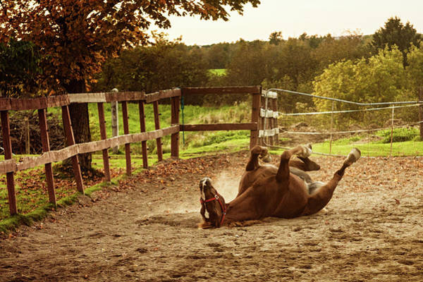 Upside Down Photograph - Horse Upside Down by Patrick Matte