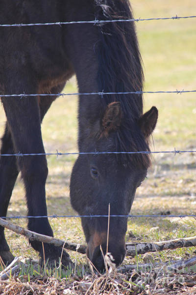 Photograph - Horse Visit by Donna L Munro