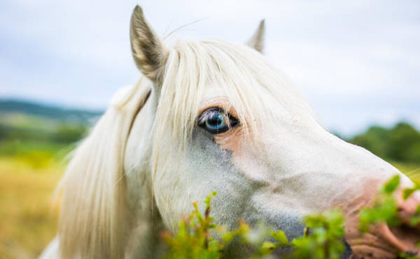 Photograph - Horse With Blue Eyes. by Gary Gillette