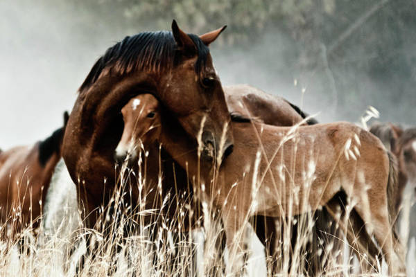 Mare Photograph - Horse With Foal by Fran Maldonado